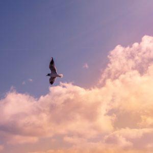 Great Ocean Road Scenic Flights